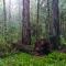 redwoodparks