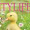 CitylifeMagazines