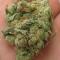 westcoastcannabis420
